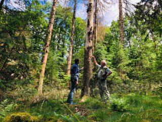 Bürgermeister Daniel Kiefer (links) und Förster Pfitzer (rechts) sichten Schäden im Gemeindewald