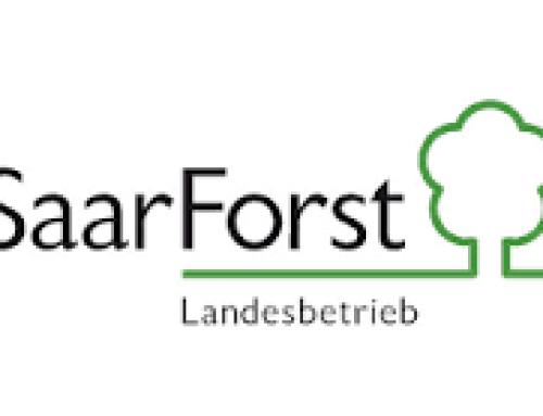 Deutsche Waldtage 2020 –  SaarForst lädt zu Wanderungen ein